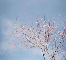 Spring Comes by Krolikowski Art