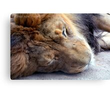 Close Up Lion Photographic Print Canvas Print