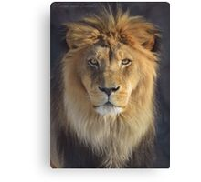 Profile Lion Photographic Print Canvas Print