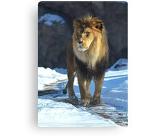 The Hunter Lion Photographic Print Canvas Print