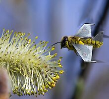 Fighter Bee by Nathan Robinson