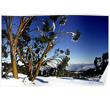 Frozen Snowgums, Mt Baw Baw. Poster