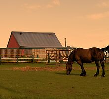 Sunset at Hatfield Farm by kenmo