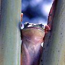 AUSTRALIAN SPLENDOUR  by helmutk