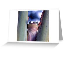 THE BIG SQUEEZE Greeting Card