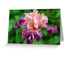 She's A Lady - Iris Greeting Card