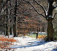 In winter wonderland by jchanders