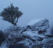 Bluff Knoll Tree by Stephen  Williams