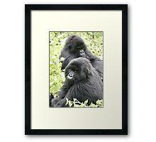 Mountain Gorillas II Framed Print