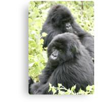 Mountain Gorillas II Canvas Print