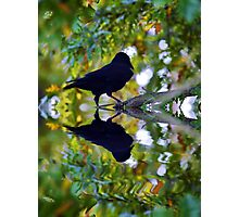 Crow Reflected Photographic Print