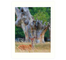 Young fallow deer Art Print