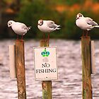 No fishing by Tony Hadfield