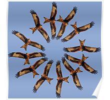 Red kite circles Poster