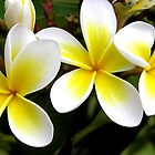 Frangipani Frenzie by Michelle Larrea