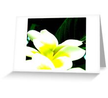 Fabulous Frangipanis Greeting Card
