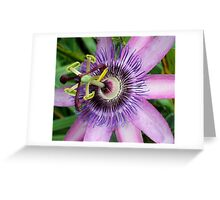 Purple For Passion Greeting Card