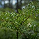 Scrambling Coral Fern by Ben Loveday