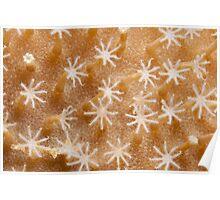 Ribbon Reefs - Coral Polyps Poster