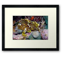 Ribbon Reefs - Green Leaf Scorpion Fish Framed Print