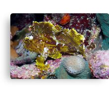 Ribbon Reefs - Green Leaf Scorpion Fish Canvas Print
