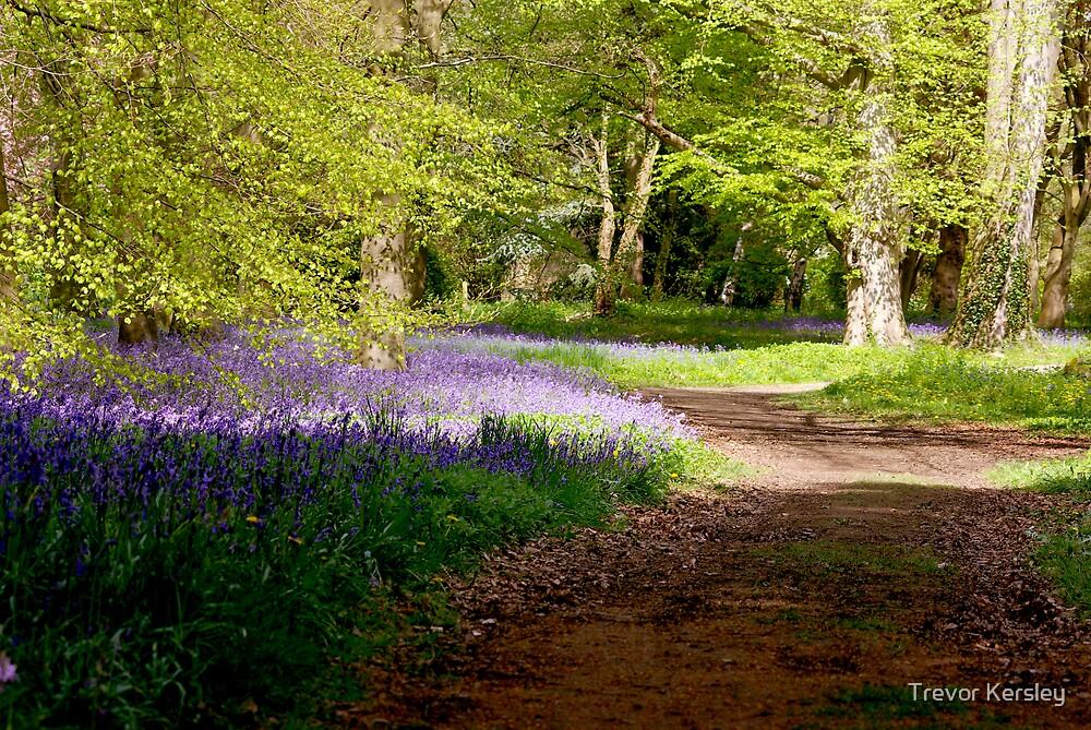 A Walk in Bluebell Wood- Thorpe Perrow (Spring) by Trevor Kersley