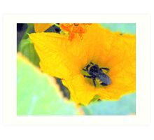 Bumble Bee series.... Art Print
