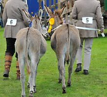 Peebles Show Donkeys by rosie320d