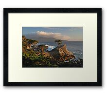 Lone Cypress - Monterrey, California Framed Print