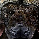 """""""Face a Cape Buffalo"""" - Oil Painting by Avril Brand"""