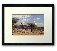 Reticulated Giraffe (Camelopardalis reticulata) Framed Print