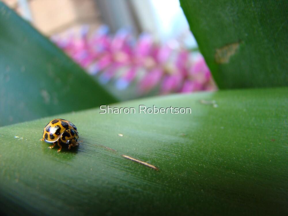Lady Beetle by Sharon Robertson