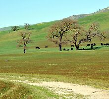 Peaceful Fields in the Golden West by Lorrie Morrison