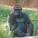 St. Louis Zoo by Jim Caldwell