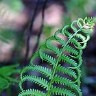 Gently Curving Fern by Debbie Oppermann
