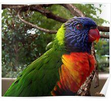 Pretty Birdy ! Poster