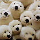 Seals Saying Buy Me Buy Me by Colin S Pearson