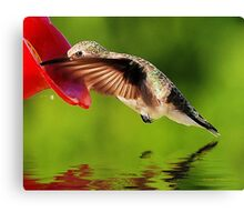 Caught In The Nectar Canvas Print