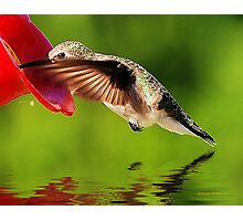 Caught In The Nectar Photographic Print