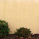 Wallpaper by gracelouise