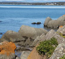 snowy mountains in the background - Tasmanian beach by gaylene