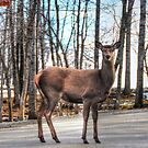 High heals on the Highway - Oh Deer by Poete100