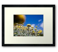 looking up ............. Framed Print