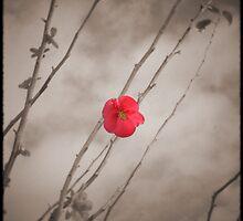 Le Fleur Rouge by Melanie  Dooley