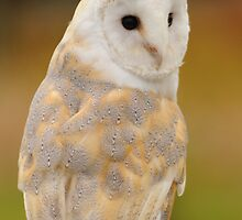 Barn Owl by Charles Howarth