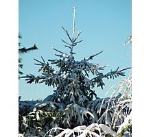 Winter Trees - 3 Photographic Print