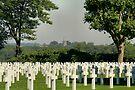 Fallen but not Forgotten by Jo Nijenhuis