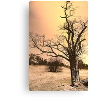 Winter Chill - Hill End - The HDR Experience Canvas Print