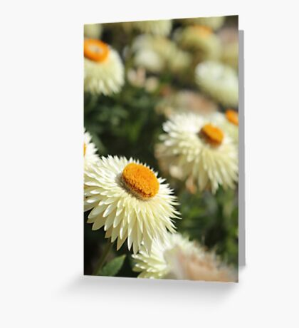 Paper daisies kind of day  Greeting Card