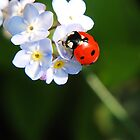 Ladybird by Mark Bateman